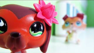 Littlest Pet Shop: Popular (Episode #11: Revenge Isn't