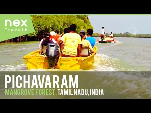 Pichavaram Mangrove Forest Video #1- Tamil Nadu Tourism, India