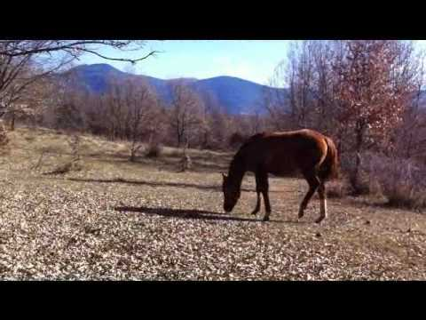 Video Pasture Board for  Foals  Autor: Imgagen Miniatura Youtube