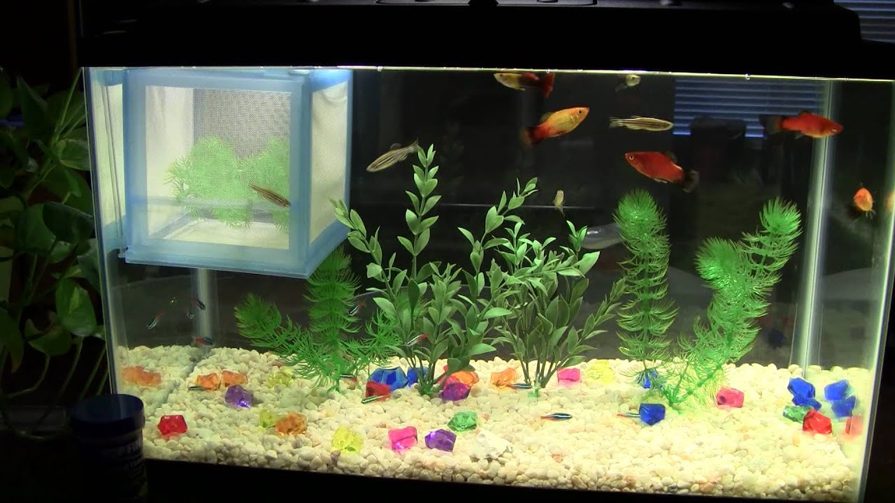10 Gallon Freshwater Aquarium - YouTube