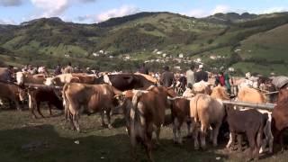 (Documentar) Roșia Montana, un loc la marginea prăpastiei