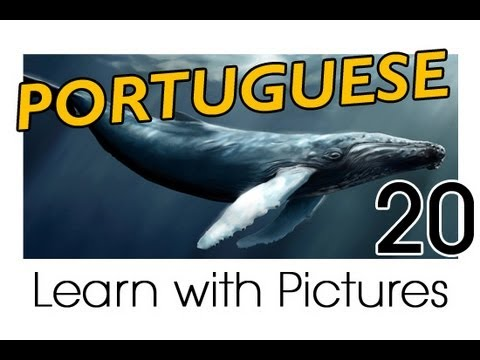 Learn Portuguese with Pictures -- Marine Animals