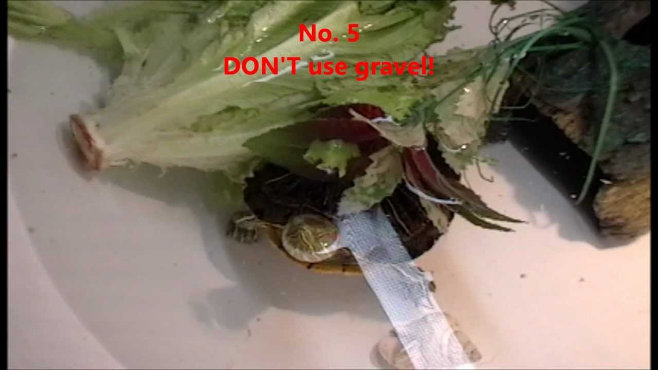 Top 10 DONTS in caring for a Red Eared Slider Turtle. Part 1 ...