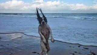 Perros - Fotos en el momento exacto.