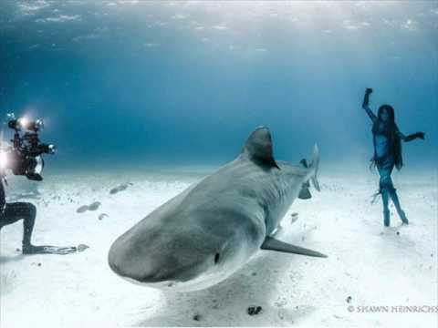 Dangerous swim girl dancing with tiger sharks photos