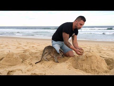 Кога наместо куче, за домашно милениче ќе си земеш мало кенгурче