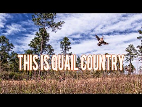 Quail Country Plantation Promo