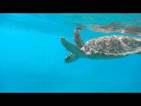 Emma's Awesome Sea Turtle Video, Virgin Islands, June 2013