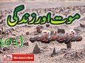 Allama Molana Fakhar Naveed Saddiqui Sahib new best bayan 2017 Mot Aur Zandagi part 1