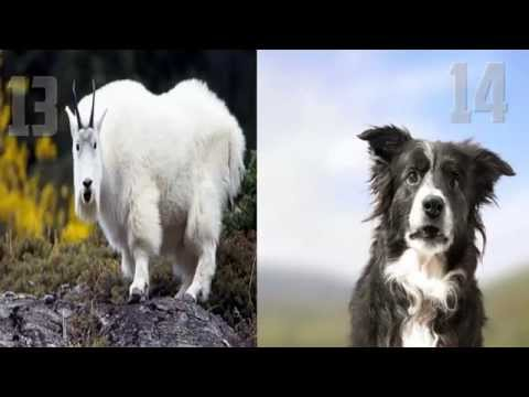 Video de Animales Muy Chistosos (very funny animals)