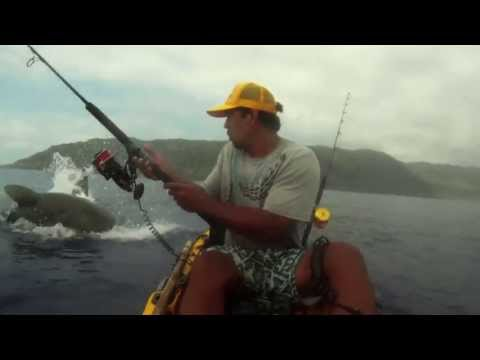 Gặp cá mập khi đi câu