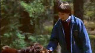 Fluke [More Than A Dog Movie]
