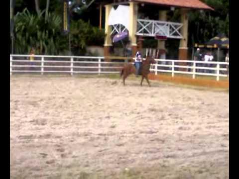 egua quarto de milha em quixeramobim nascisda 12/3/2008 a venda (85)99888871