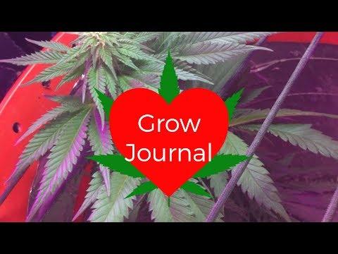 Grow Journal: Northern Lights CFL