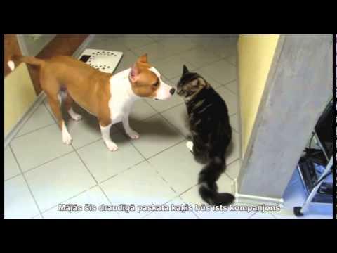 Kaķi meinkūni