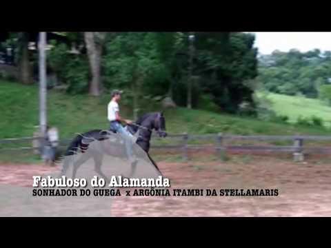 CAVALO DA SEMANA - FABULOSO DO ALAMANDA - MANGALARGA AMRCHADOR