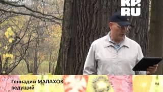 Геннадий Малахов о свойствах коры деревьев