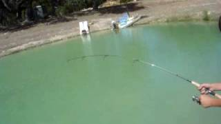 catching catfish