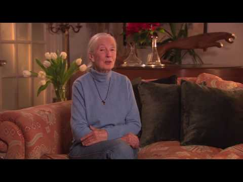 Dr. Jane Goodall on The Ivory Game