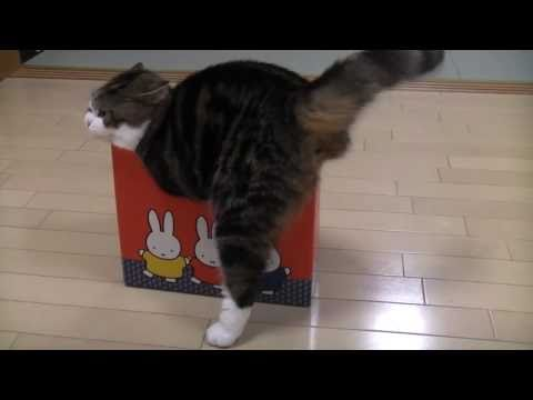 -Many too small boxes and Maru.-, When Maru found a smaller box, do you think that he gives up entering? http://sisinmaru.blog17.fc2.com/