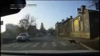 [Why did the dog cross the road] Video