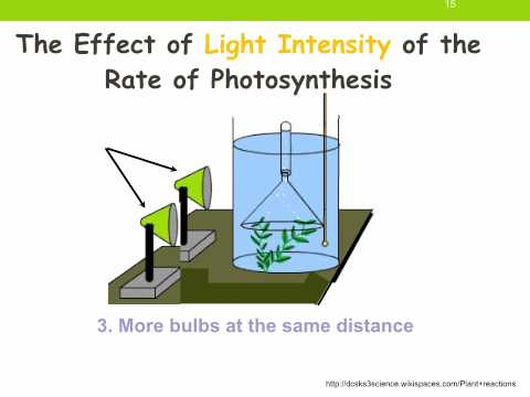 THE EFFECT OF LIGHT INTENSITY ON A PLANT'S MASS