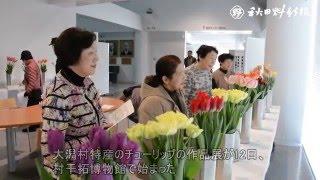 動画:特産チューリップ鮮やか3千本