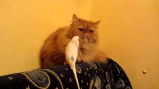 Cat has an Annoying Visitor