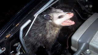 Are There Creatures Living in Your Car You Don't Know About?