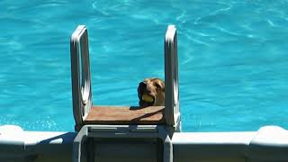 El perro nadador
