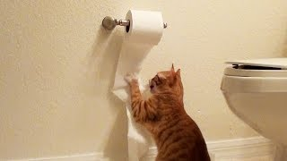 WARNING! Toilet Paper Attacks Cute Kitten!