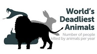 What is the World's Deadliest Animal?