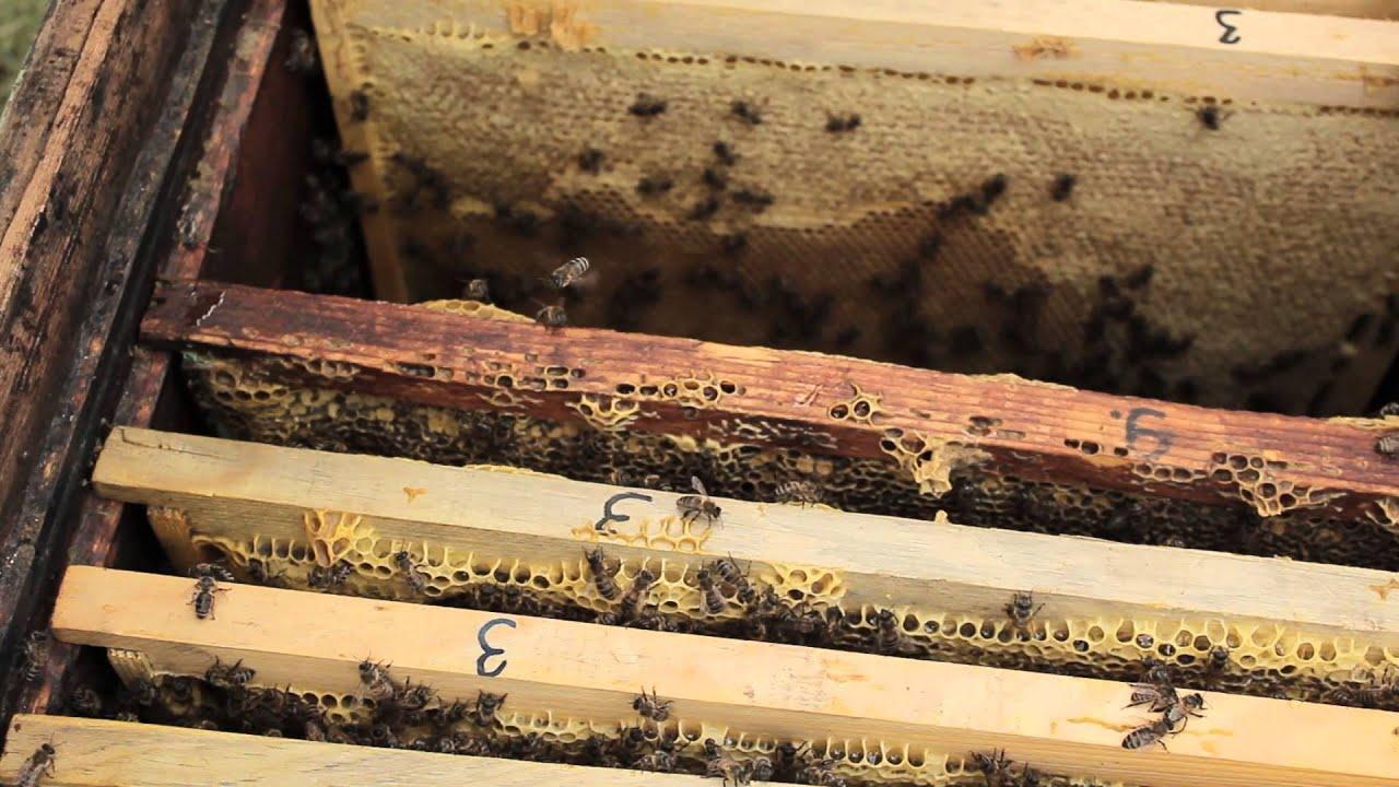 Как сделать отводок пчел Пасека. Пчелы. Мёд 96