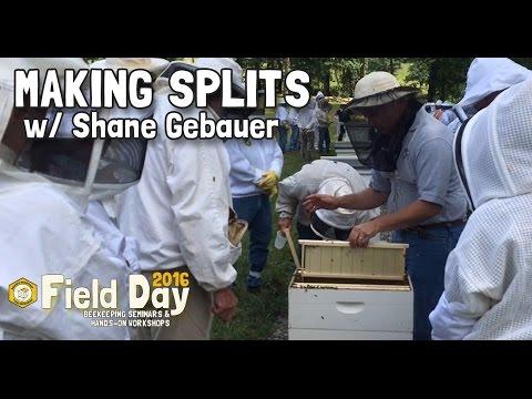 Making Splits w/ Shane Gebauer