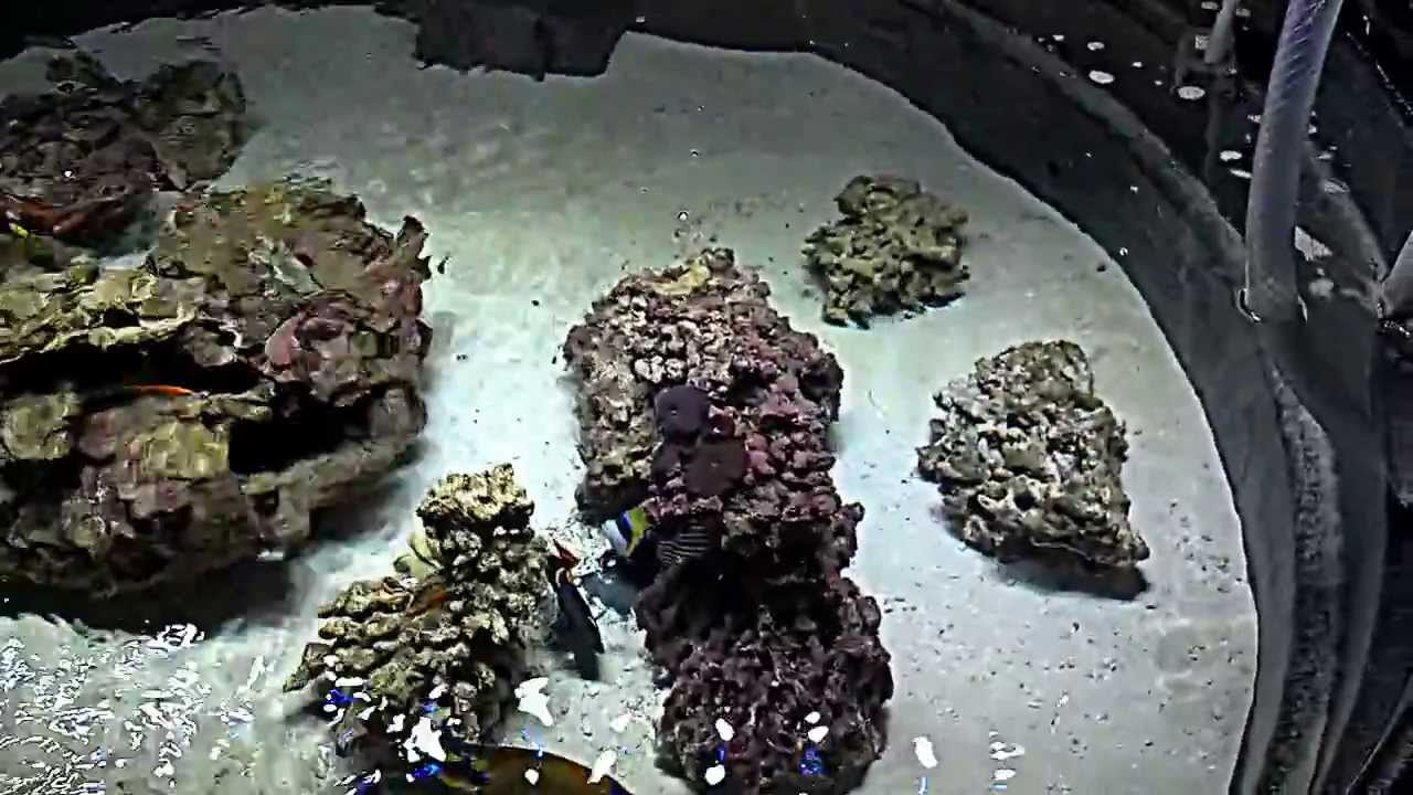 300 gallon Saltwater Lagoon (pond) v.2.1 - YouTube