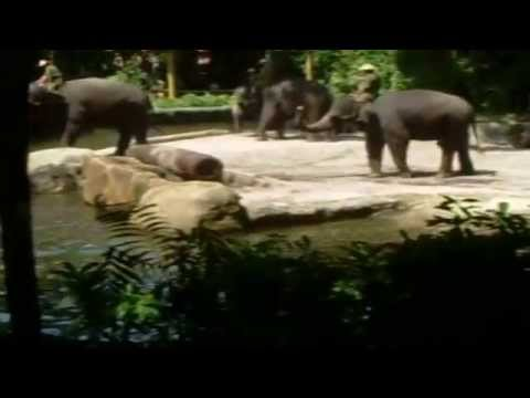 Singapore Zoo Elephants at Play and work Show