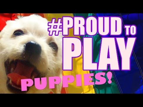 Puppies Are Proud To Play! #PROUDTOPLAY
