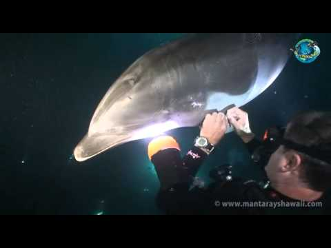 This Dolphin Needs Help With A Troublesome Hook An