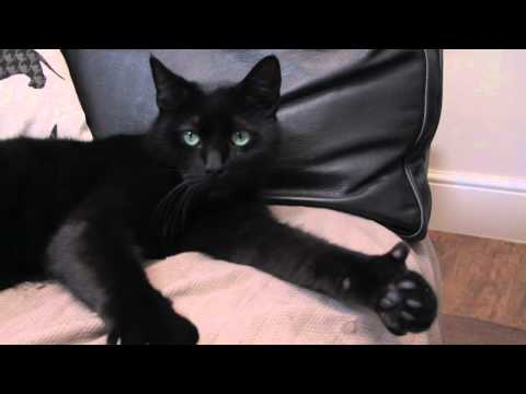 Amazing Cat Gives Thumbs Up, Jimmy is a polydactyl cat. He's probably the laziest cat in the world but he's also super clever and has thumbs. And he's got a great party trick :-)