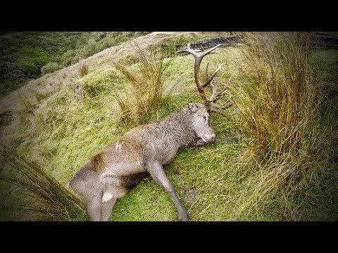 Hunting Red deer in New Zealand part 61