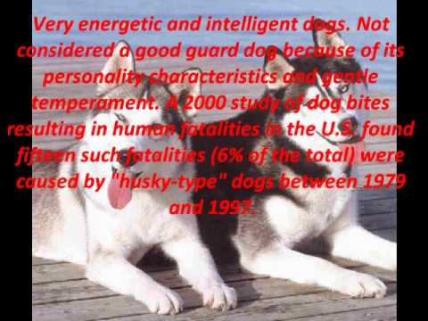 Top 10 Most Dangerous Dog Breeds - YouTube