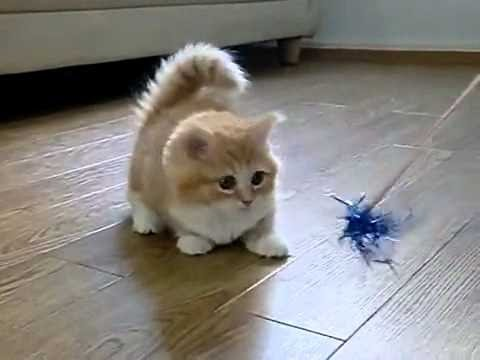 Funny Videos 2014 - Funny Cats Video - Funny Cat Videos Ever - Funny Animals Funny Fails 2014