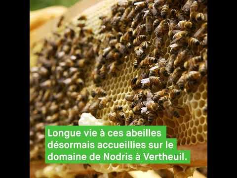 Visite-dégustation du rucher - Domaine de Nodris