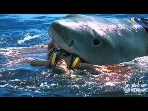 German Backpacker Shark Attack On Australian Beach Real or ...