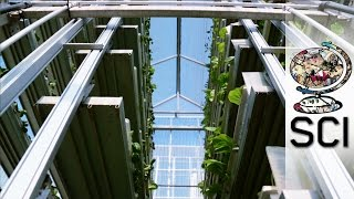 Vertical Farming in Singapore is the Future of Food Production
