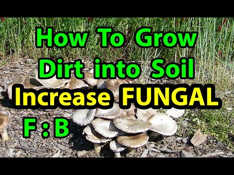 How To Grow DIRT to Healthy SOIL in NO TILL Homesteading Vegetable Gardening for beginners 101