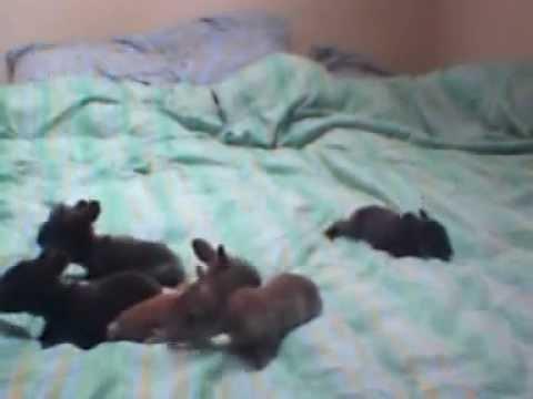 Week Old Bunnies