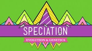 Speciation: Of Ligers & Men