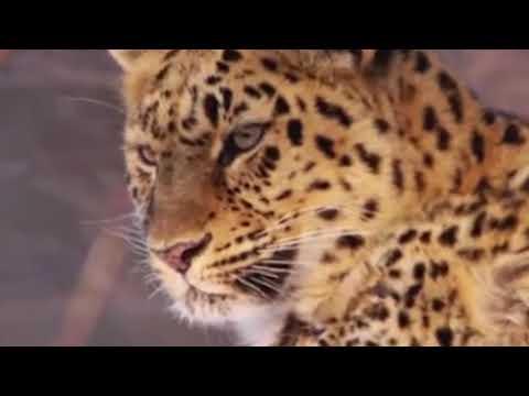 4 октомври-Световен ден на животните