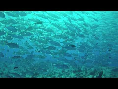 Liveaboard diving on Ocean Hunter III (Fish`n Fins) filmed with gopro hero 2 and Sub Zero Underwater Housing  Musik by Tryad